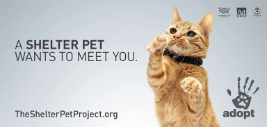 1.-The-Shelter-Pet-Project_1